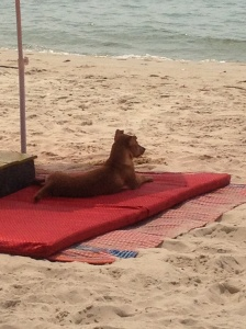 Dog chilling on Serendipity/Ochheuteal beach